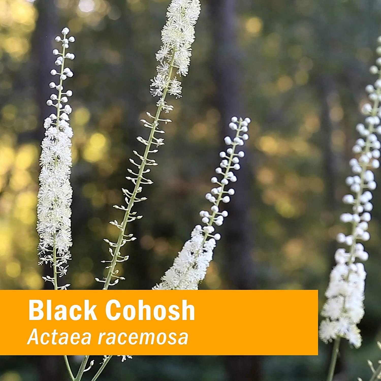 Gaia Herbs Black Cohosh, Vegan Liquid Capsules, 60 Count