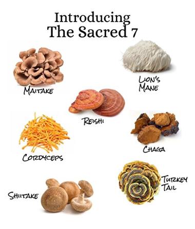 7 Organic Mushroom Extract Powder